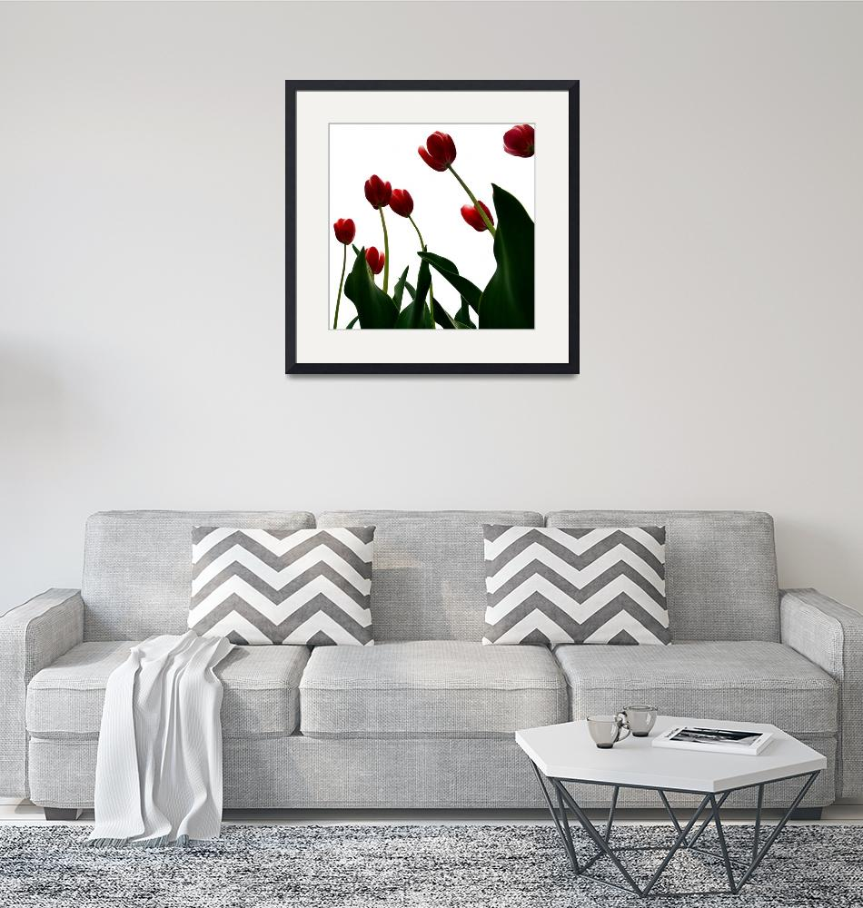 """""""Red Tulips from the Bottom Up ll""""  by Michelle1991"""