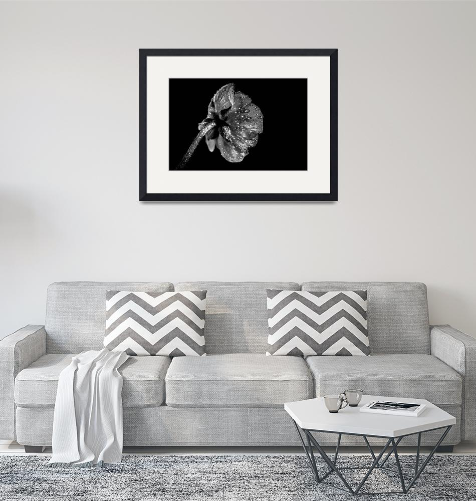 """Black and white beautiful flower""  by Art_by_Lilia"