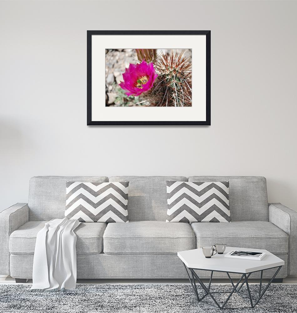 """""""Beavertail Cactus""""  (2008) by PadgettGallery"""