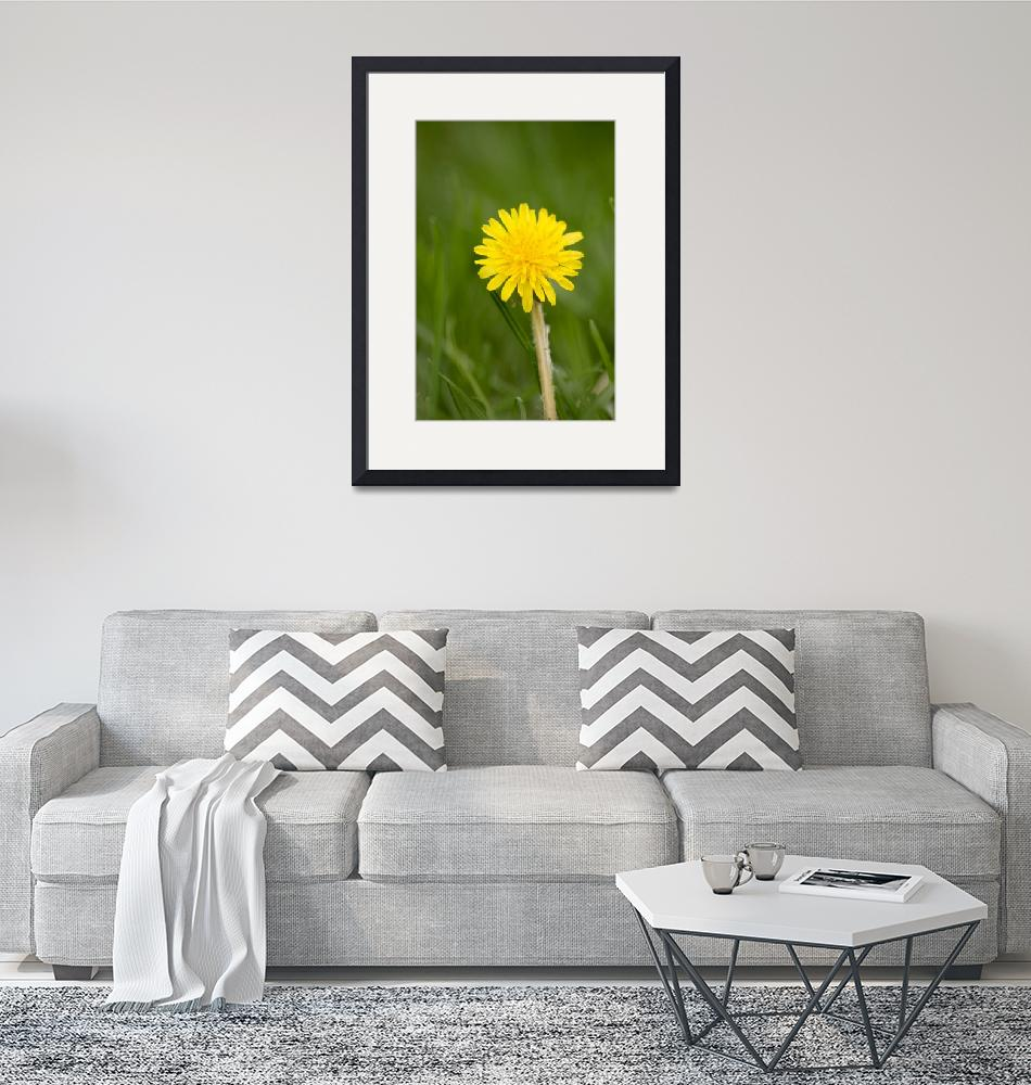 """Yellow Dandelion""  (2011) by NaturesArtPhotography"