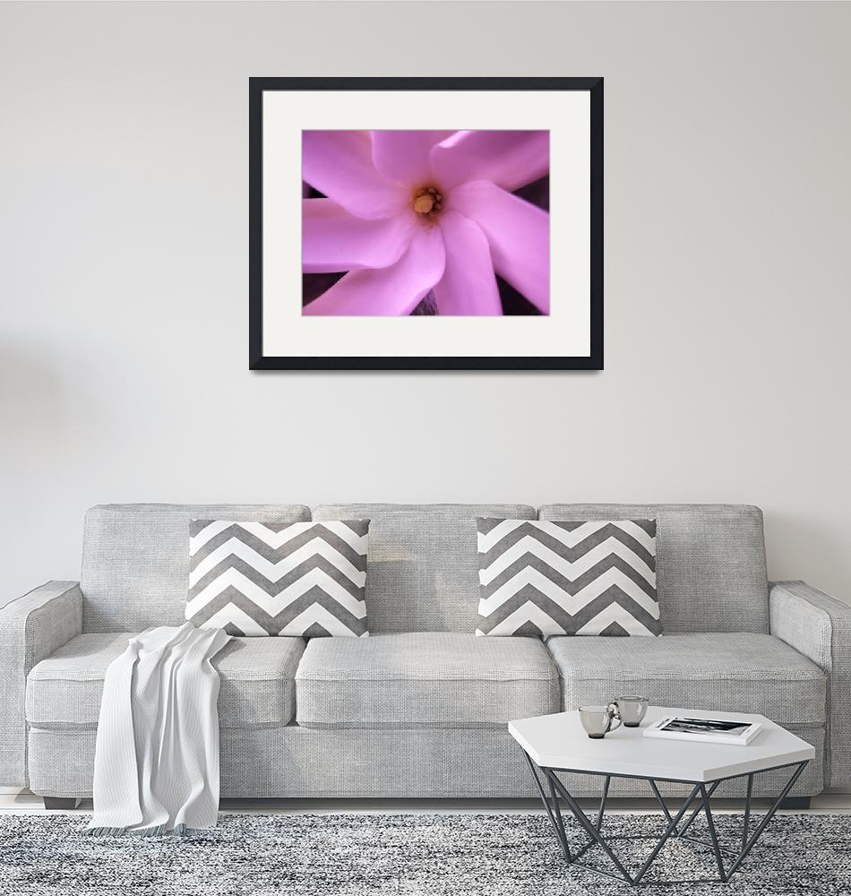 """""""Pink Hawaiian Flower""""  (2008) by AMKPhotography"""