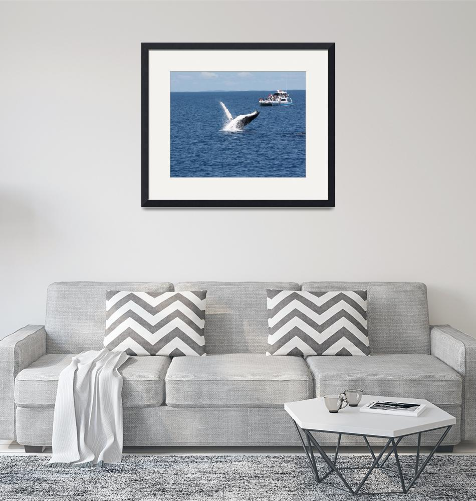 """""""NaP_ Whale Watching169a""""  by nevilleprosser"""
