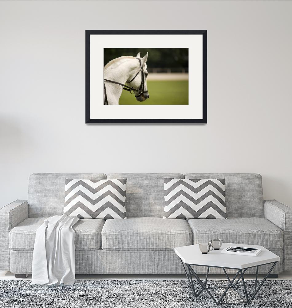 """""""Lipica horse""""  (2009) by IanMiddletonphotography"""