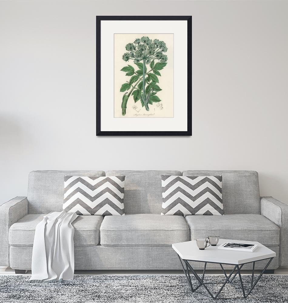 """""""Vintage Botanical Angel changelica"""" by FineArtClassics"""