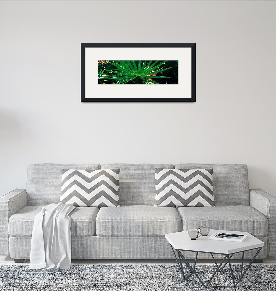 """""""Green Palm Leaf Applachacola FL""""  by Panoramic_Images"""