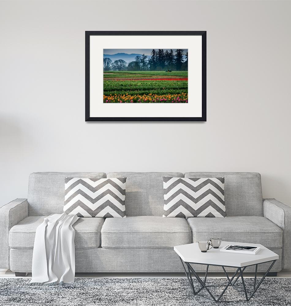 """""""Tractor in the Field of Tulips""""  (2018) by boppintheblues"""
