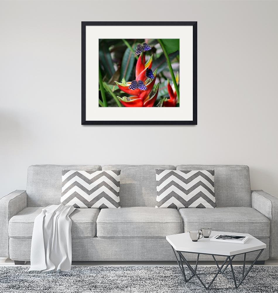 """""""Banded Purplewing Butterfly Trio on Heliconia""""  (2015) by KsWorldArt"""
