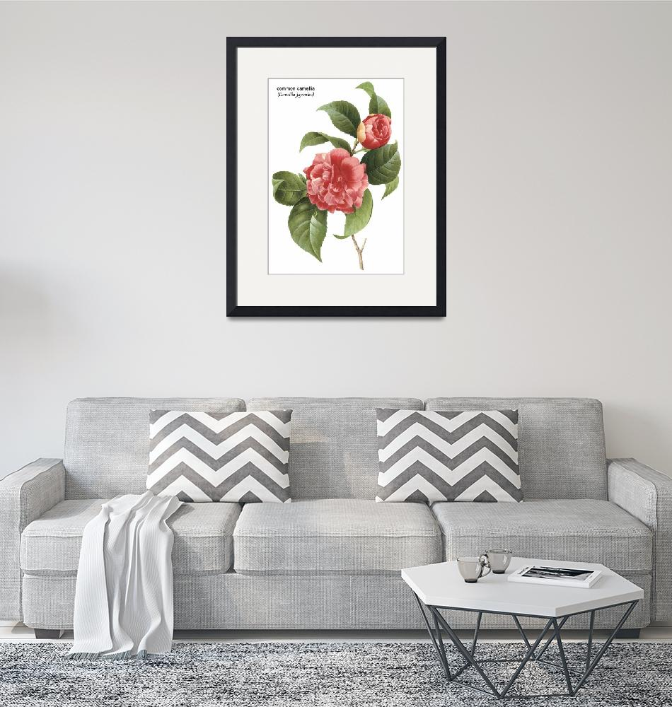 """Common Camellia (Camellia Japonica) Botanical Art""  by ArtLoversOnline"
