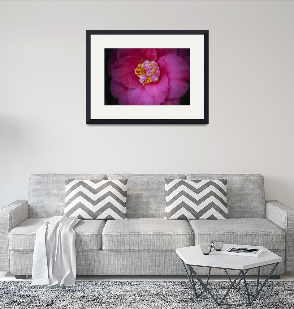 """""""Camellia Closeup Two""""  (2016) by SederquistPhotography"""