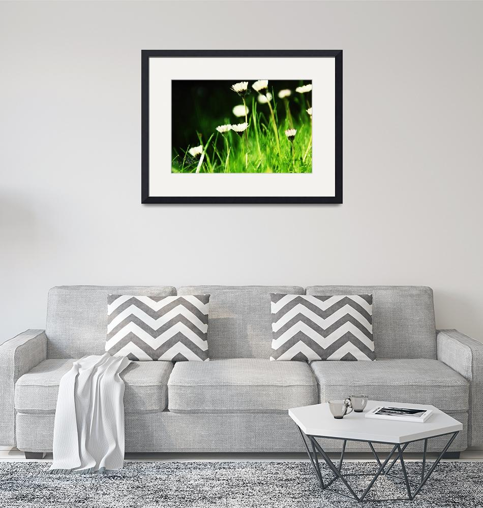 """""""Daisies in a Field of Green""""  (2009) by ingephotography"""