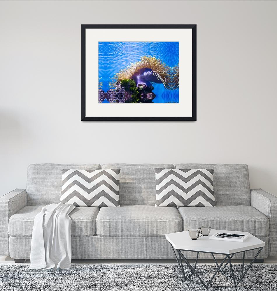 """""""2-anemone_14x10_300ppi""""  by rufus"""