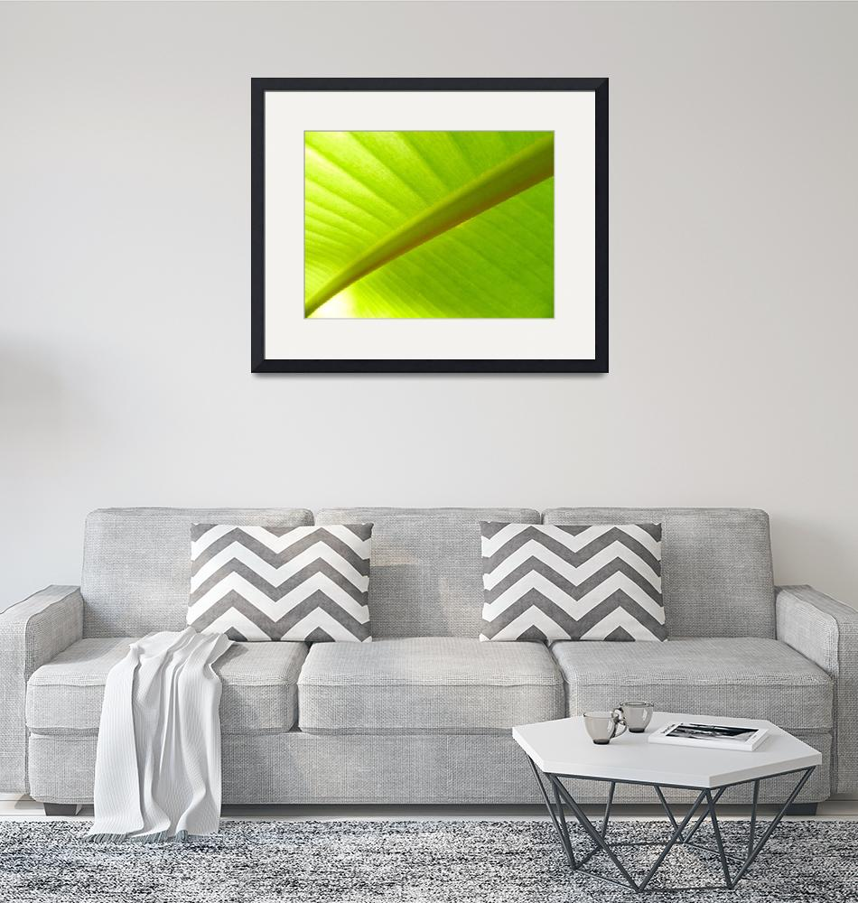 """Banana Leaf""  (2018) by Surfmore"