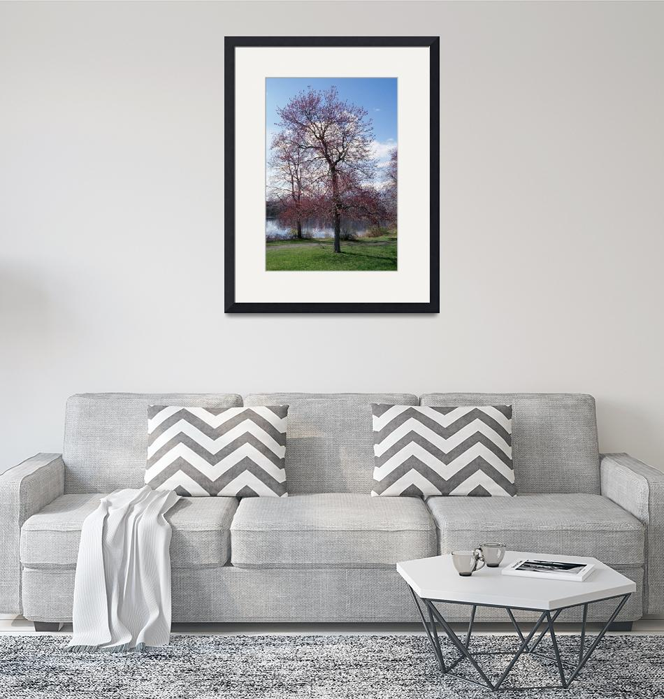 """""""Red maple tree (Acer rubrum) budding in spring""""  by Panoramic_Images"""