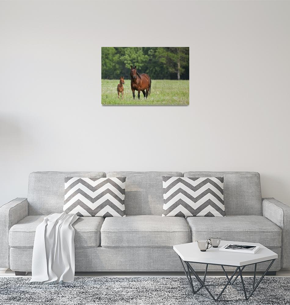 """Horse With A Colt Winnipeg, Manitoba, Canada""  by DesignPics"