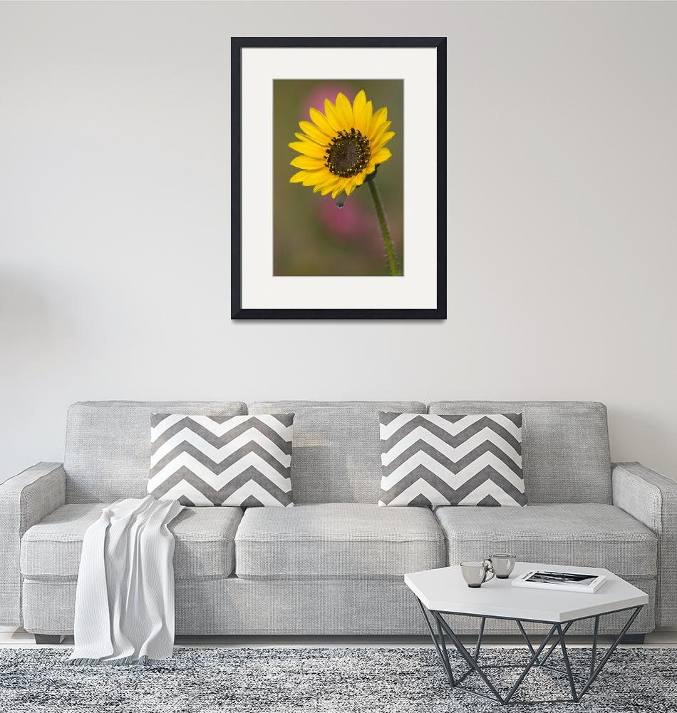 """Sunflower and Dew Drop""  (2006) by erikpronske"
