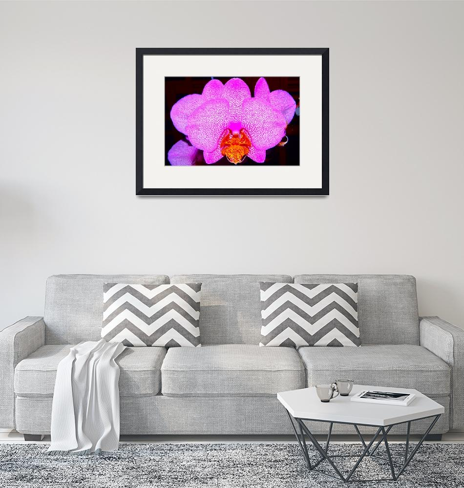 """""""Pink orchid""""  (2014) by DanSteeves"""