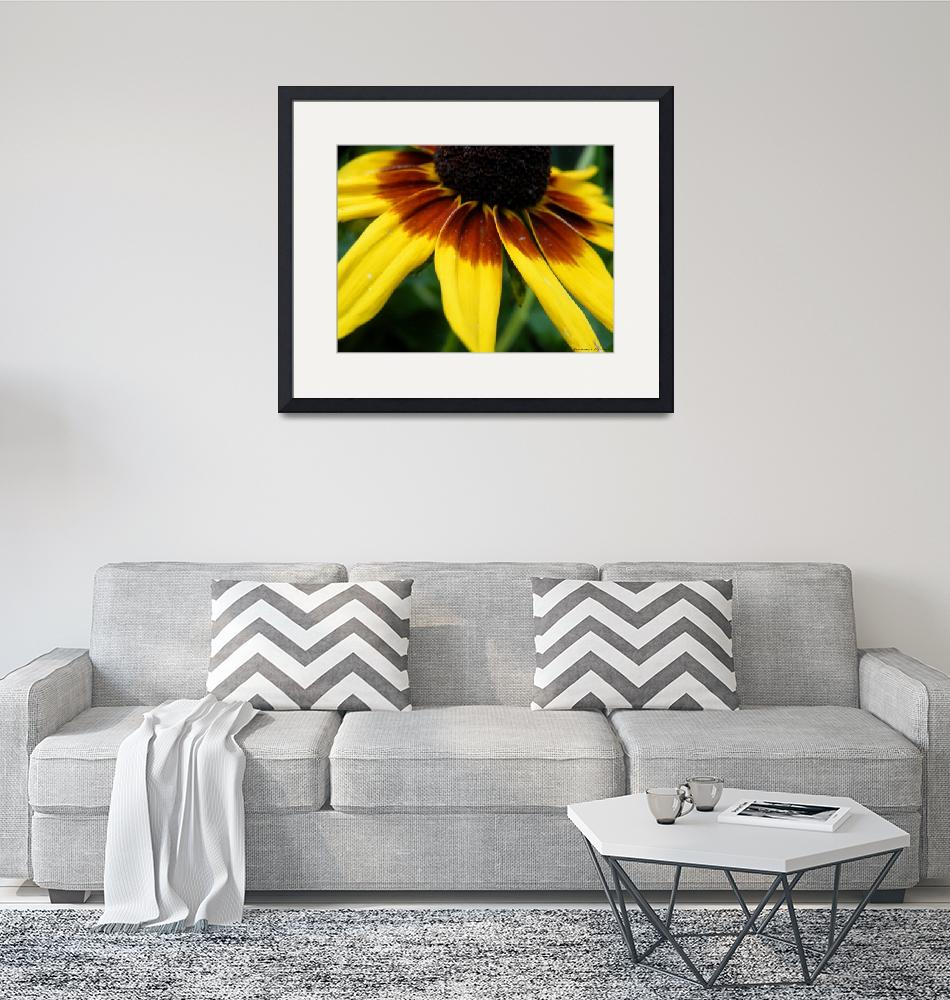 """Black Eyed Susan""  (2012) by Kimmary"