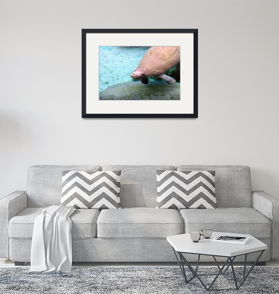 """""""Manatee Collection #1""""  by Midniteagle"""