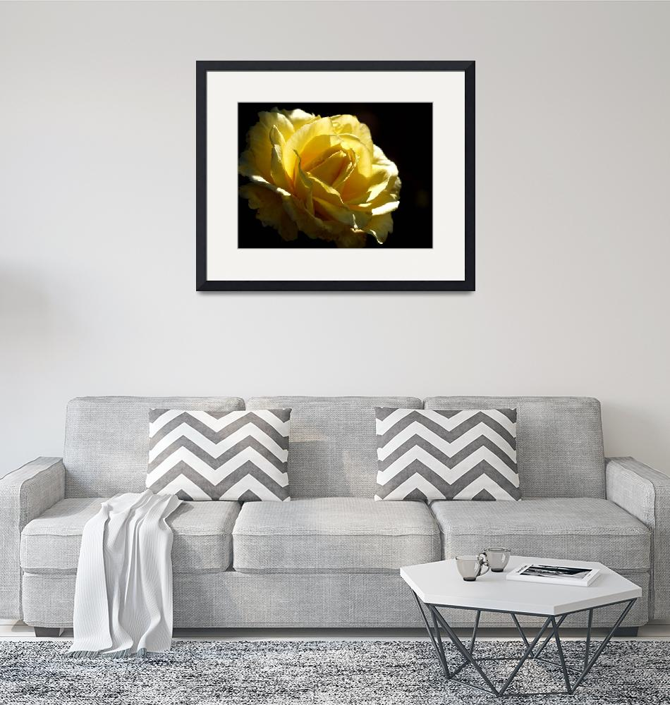 """Yellow Rose""  (2010) by raetucker"
