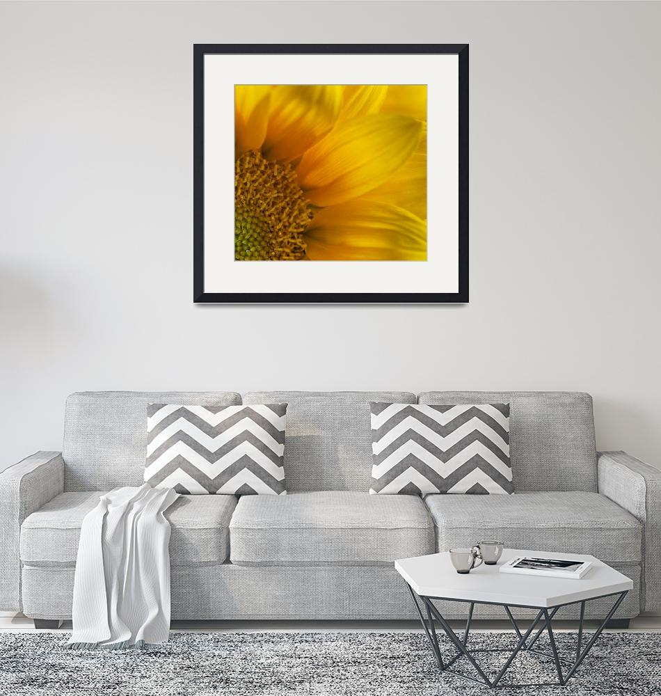 """Sun-Drenched Sunflower""  (2014) by SoulfulPhotos"