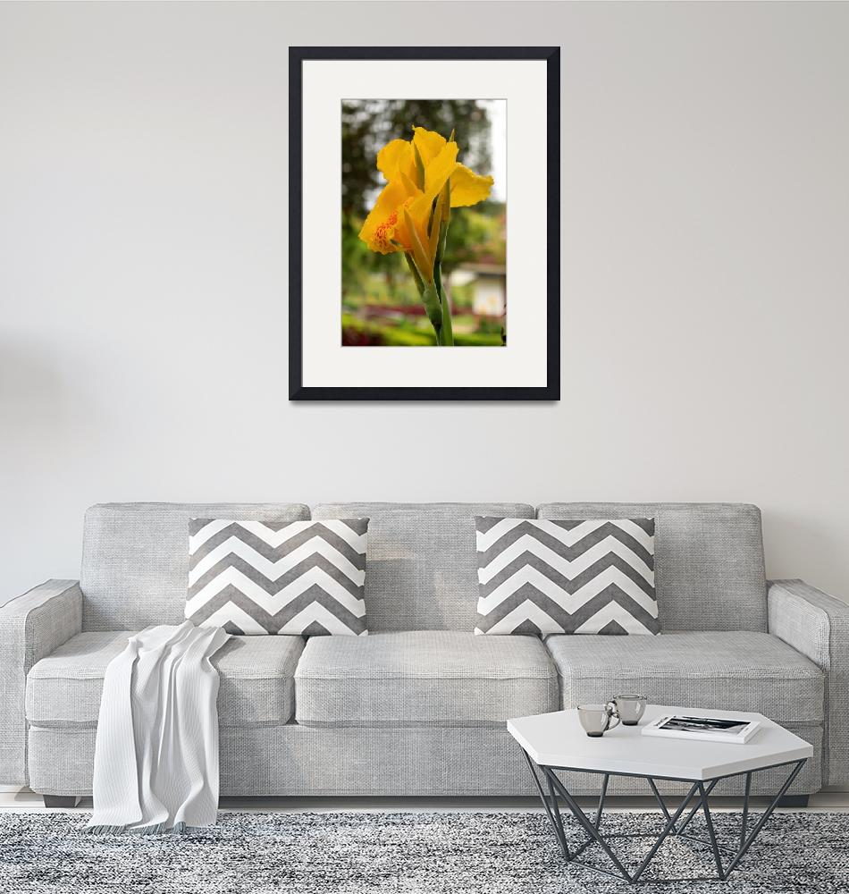 """""""Yellow Orchid""""  by mosej"""