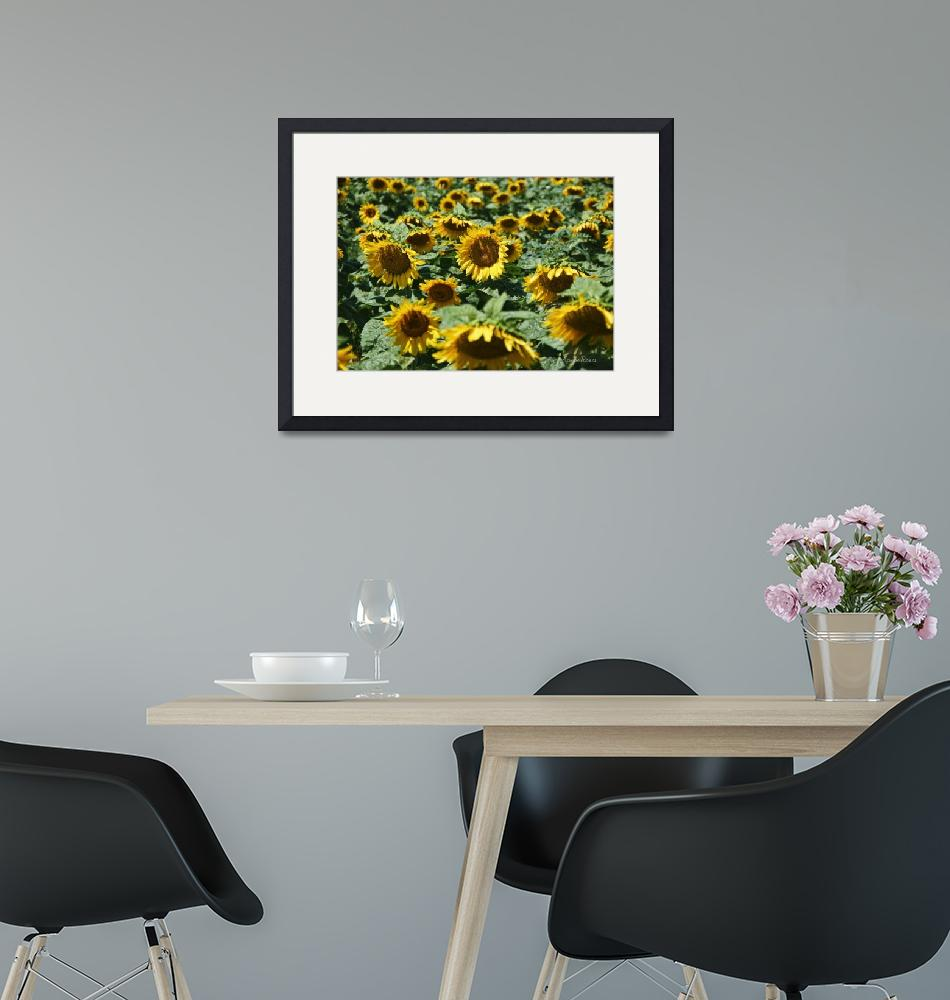"""""""Sunflowers""""  (2015) by LouiseReeves"""