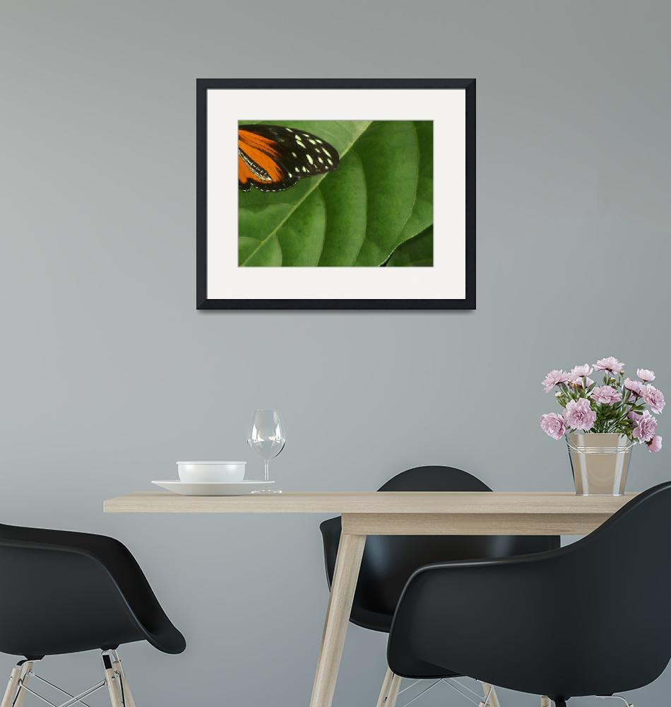 """""""On Butterfly"""