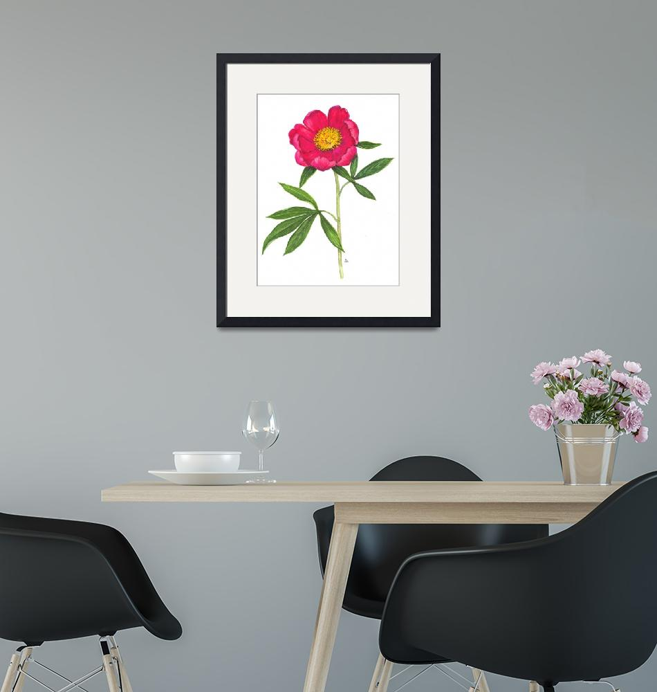 """Paeonia officinalis""  by kirke"