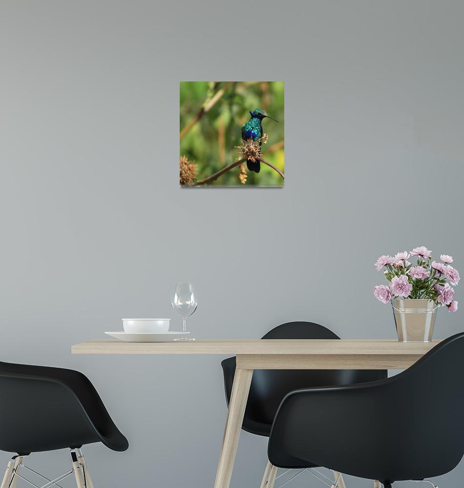 """""""Hummingbird on a Bush""""  (2016) by rhamm"""