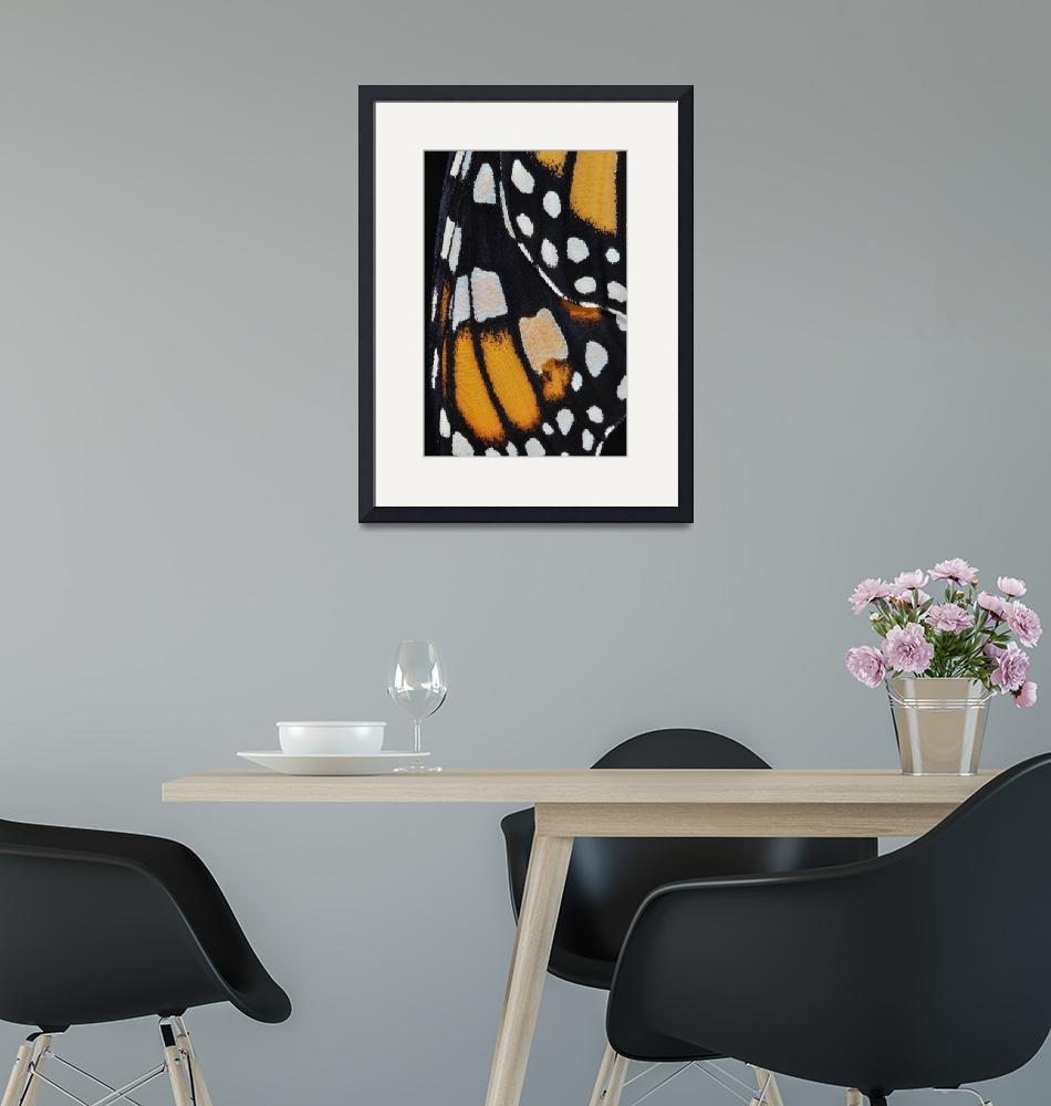 """""""Monarch Butterfly Wing Abstract No4"""" (2011) by evansonart"""