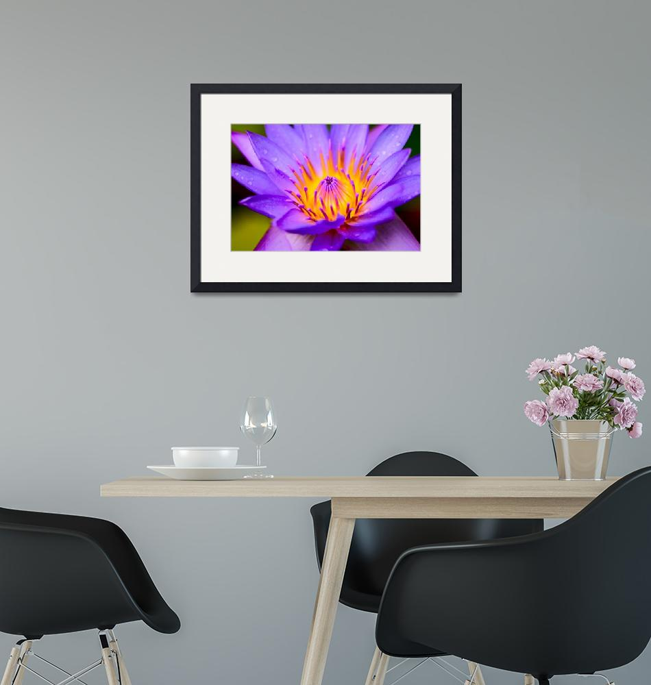 """Water lily Maldives Indian Ocean""  by JohnRees"