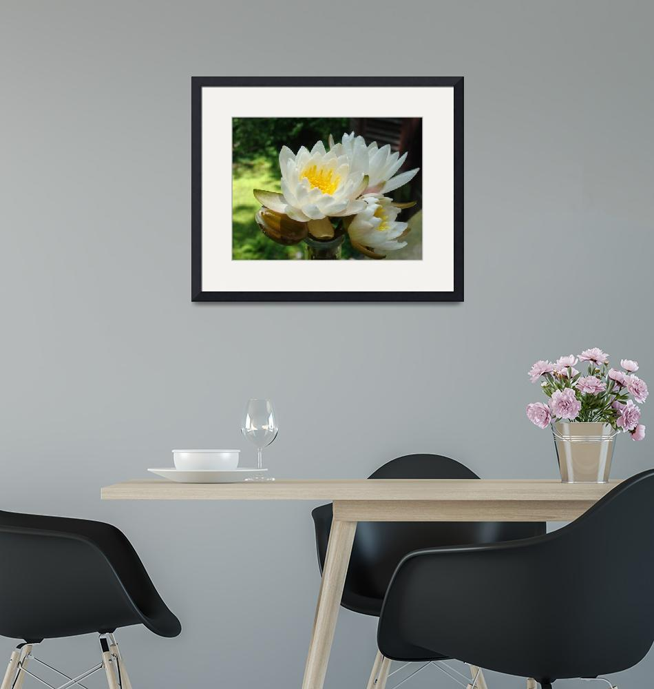 """""""Sunlit Lilies""""  (2011) by SpiritSongImages"""