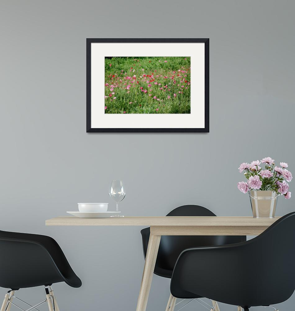 """""""Iceland Poppies""""  (2011) by rderder"""