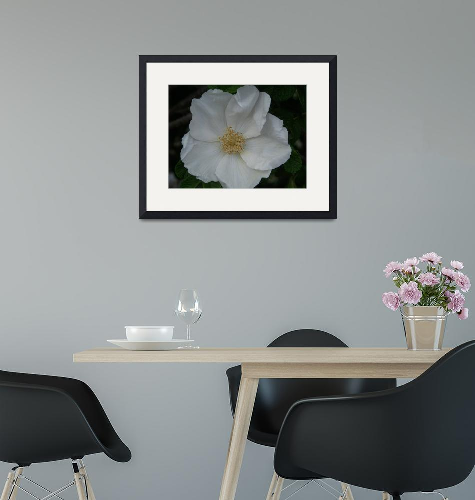 """""""White Flower"""" (2010) by Holly08"""