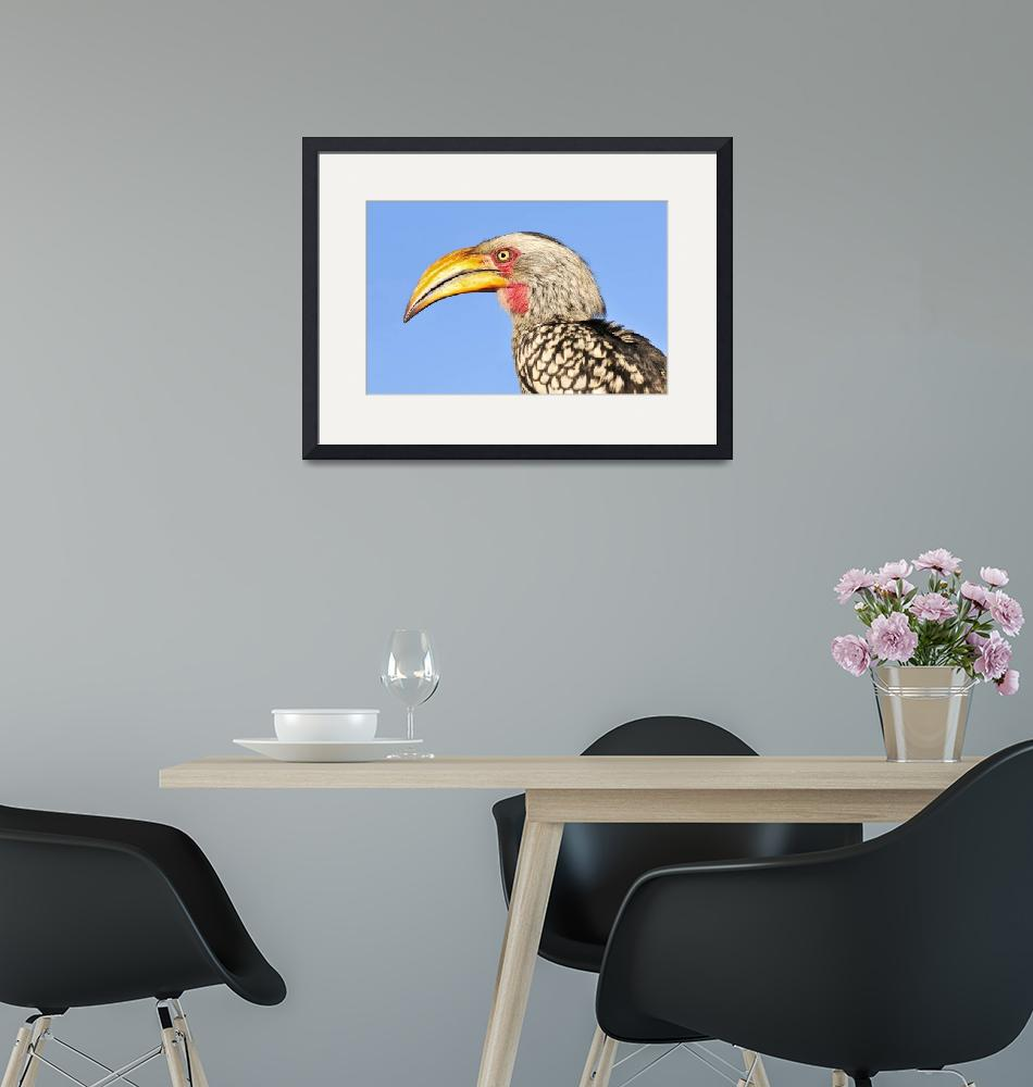 """""""WCC_1900- Yellow-billed Hornbill Portrait""""  (2015) by photocell"""