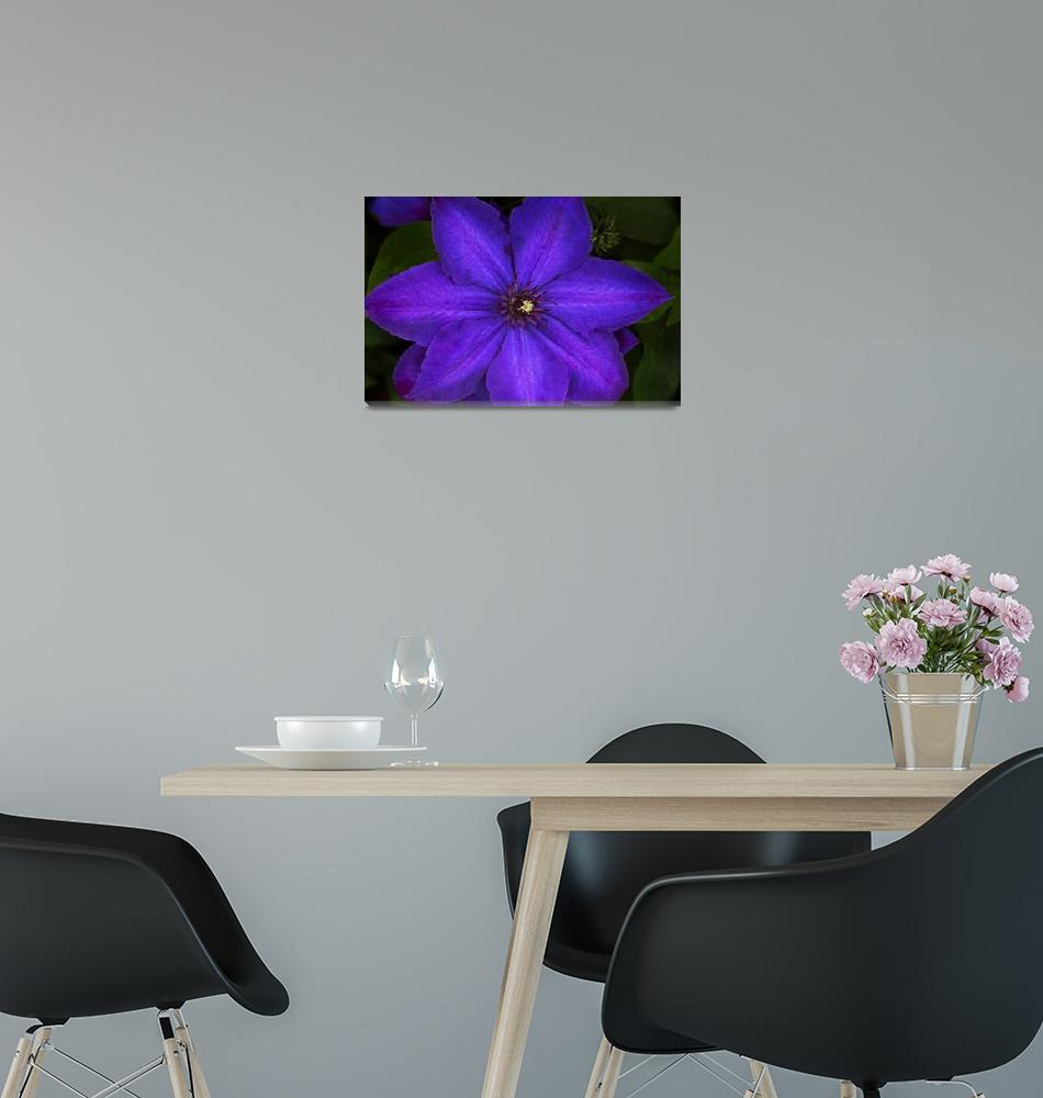 """""""Purple Clematis Flower""""  (2014) by SoulfulPhotos"""