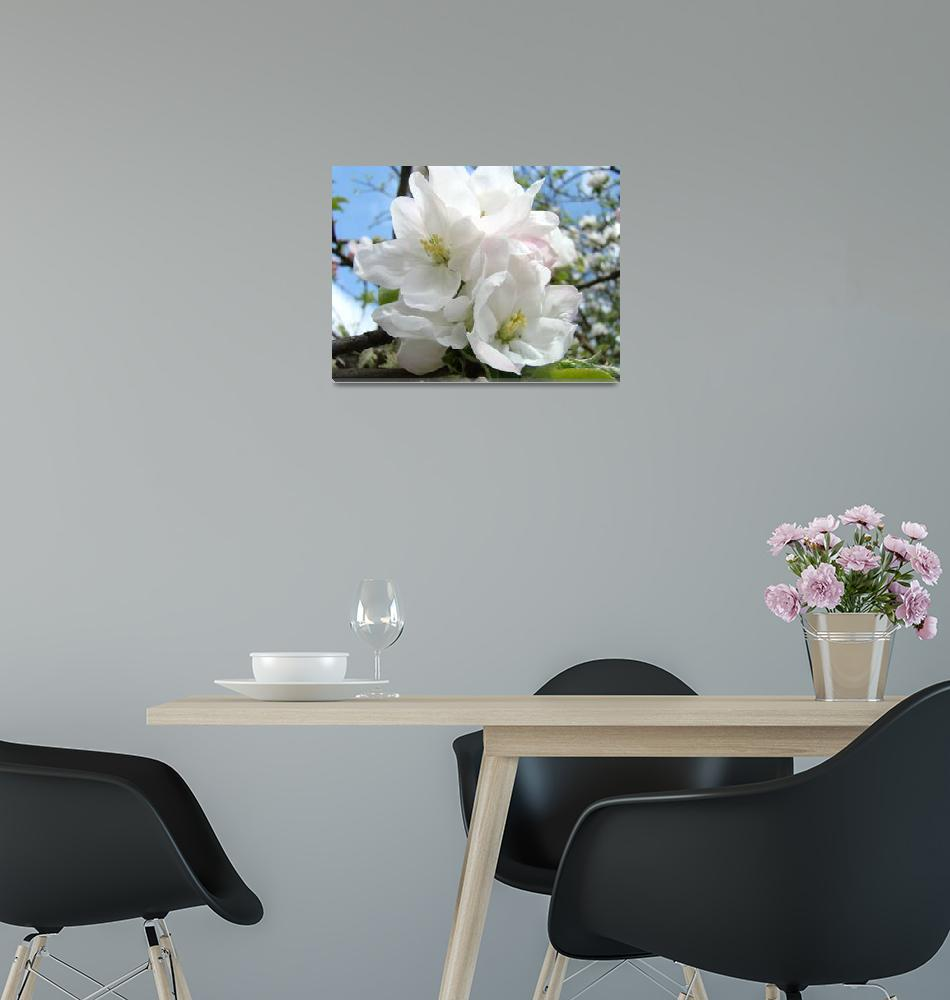 """""""Apple Tree Blossoms Art Prints Spring Trees""""  (2014) by BasleeTroutman"""