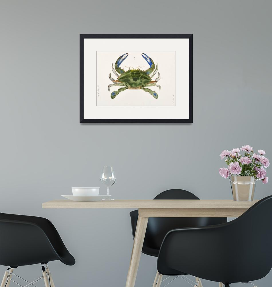 """""""Blue crab (Lupa decanta) Illustration""""  by FineArtClassics"""