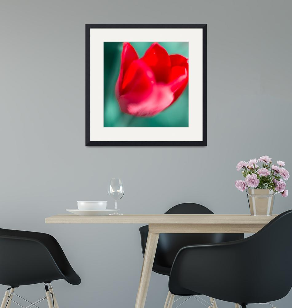 """""""Red tulip""""  (2016) by Stopshort"""