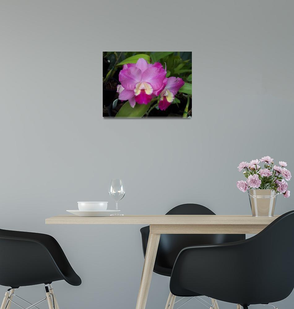 """Cattleya Orchid""  by marlenechallis"
