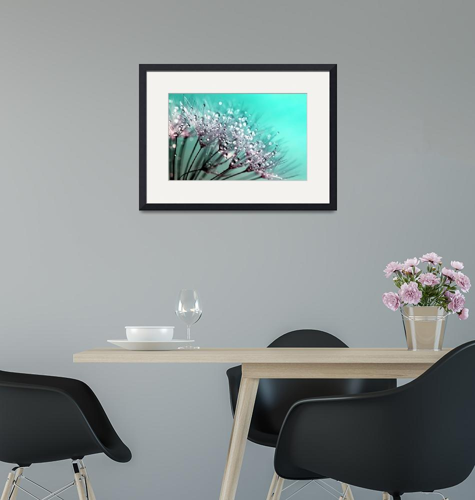 """""""Dandelion With Water Droplets Fine Art Photography""""  by modernartgallery"""