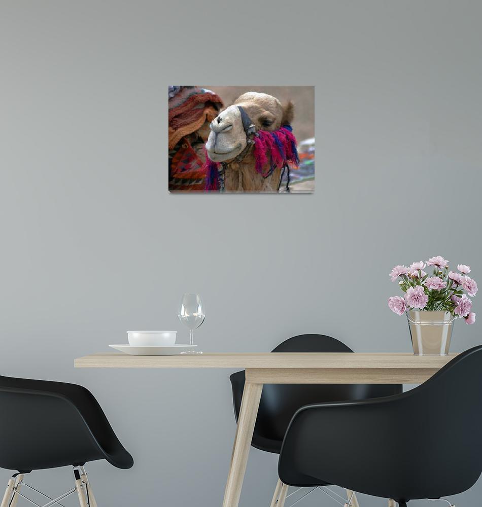 """My Friend the Camel""  (2005) by DanTravisPhotography"