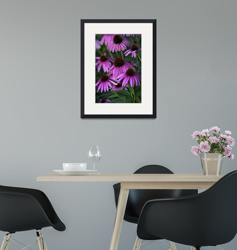 """Purple Coneflowers by Jim Crotty"" (2010) by jimcrotty"