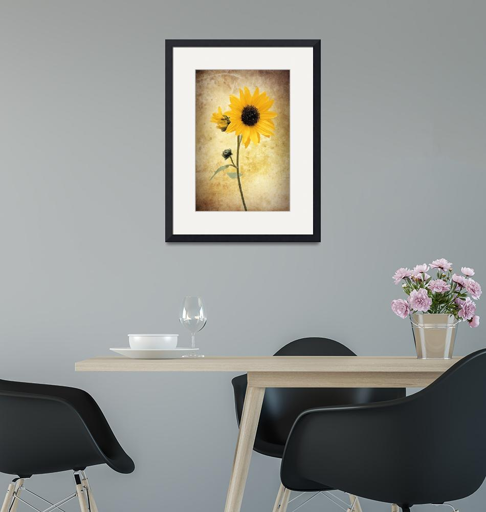 """""""Sunflower""""  (2009) by NatureVision"""