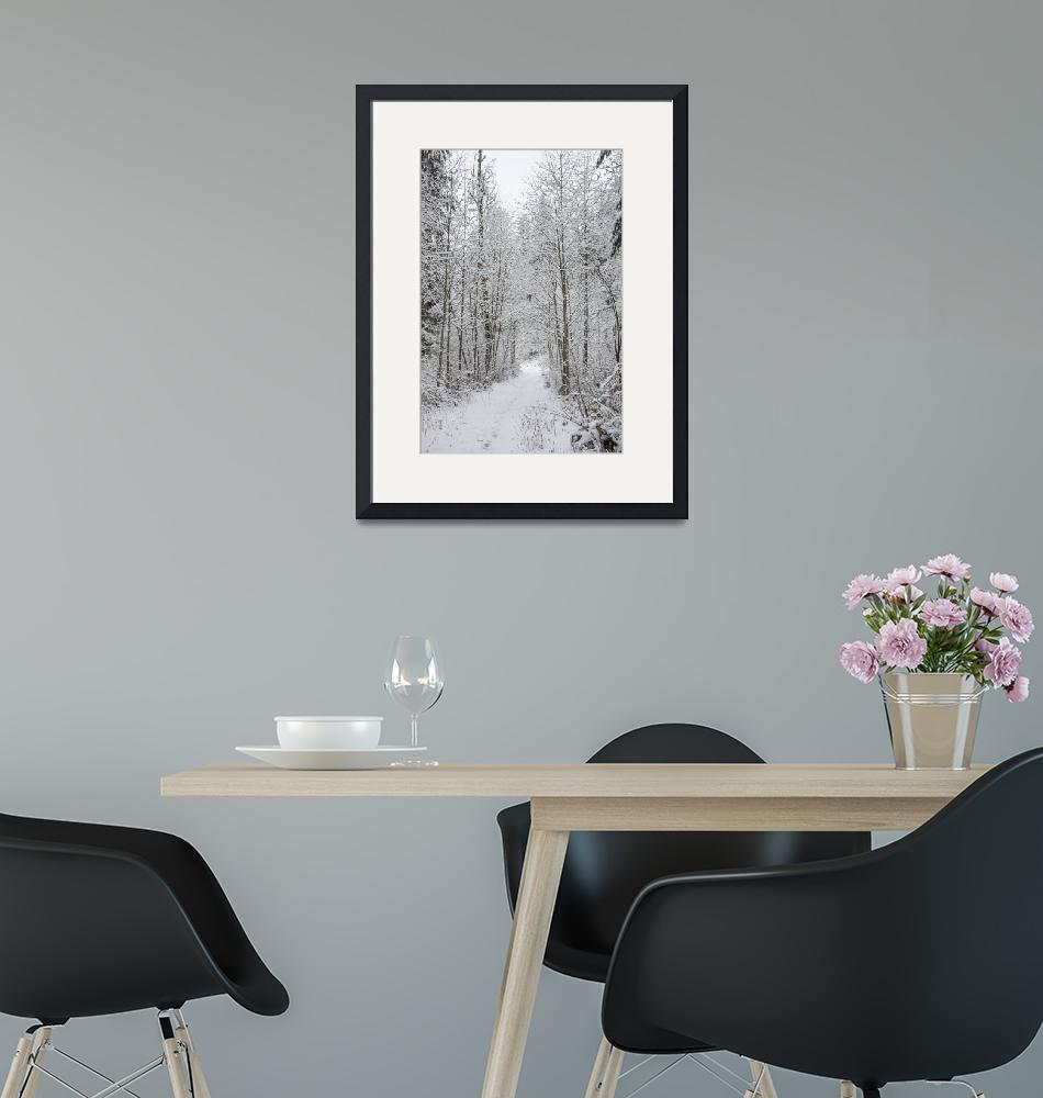 """""""Snow Covered Trees Line The Path""""  by Kirtdtisdale"""
