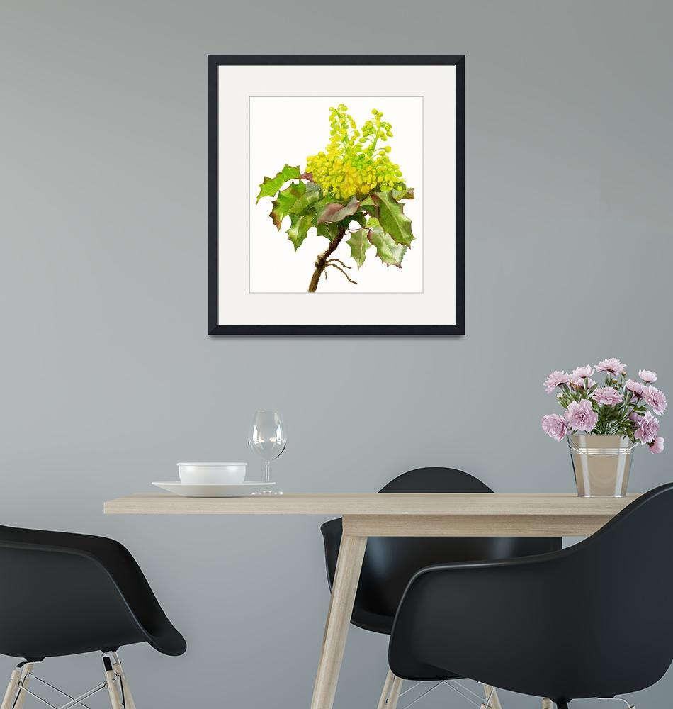 """""""Oregon Grape White Background""""  (2014) by Pacific-NW-Watercolors"""