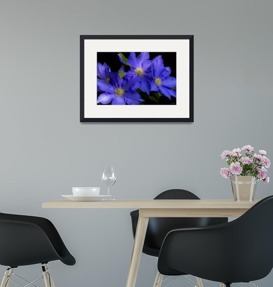 """""""F292-1 Clematis""""  (2019) by Williamcastner"""