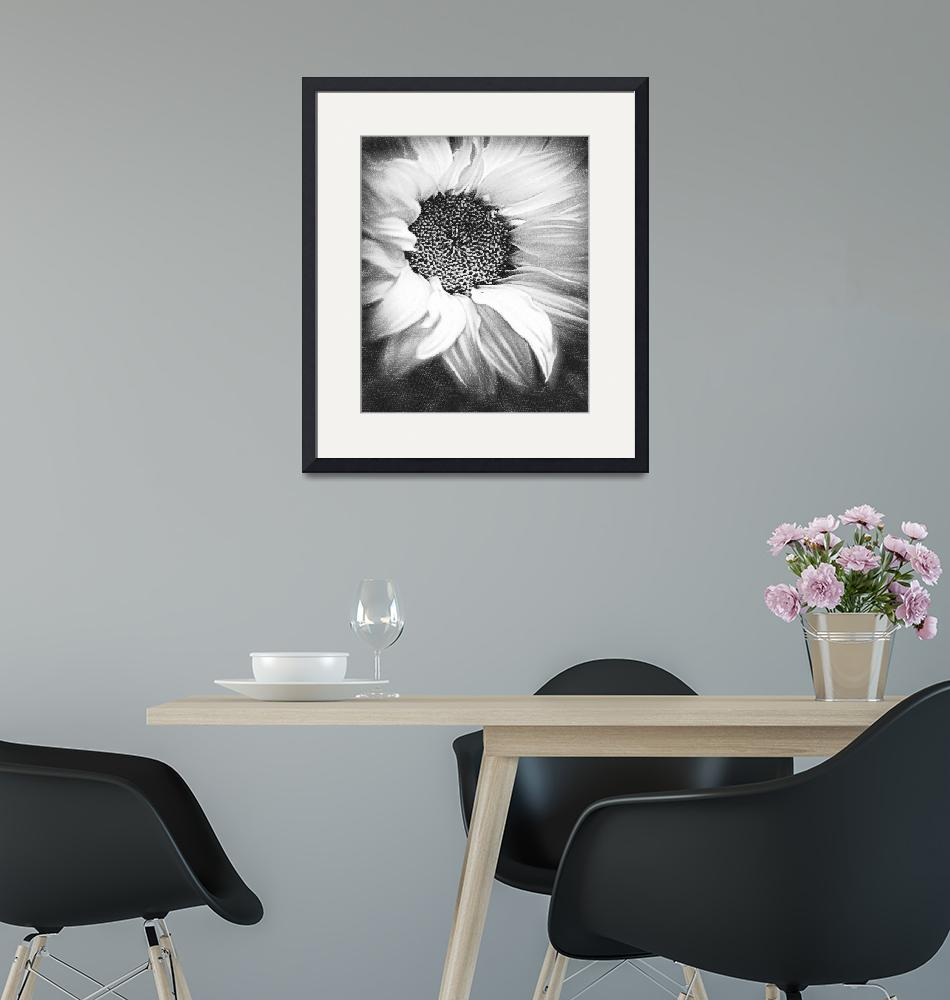 """Sunflower White And Black""  by RubinoFineArt"