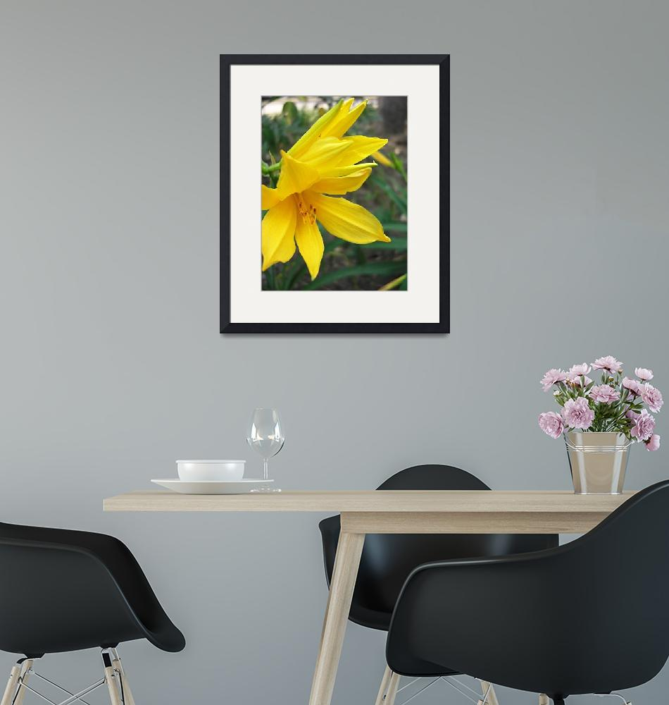 """Yellow Daylily 5""  (2009) by ChristopherInMexico"