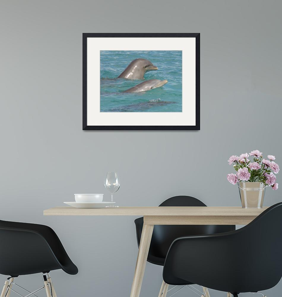 """""""Dolphins""""  (2008) by robvena"""